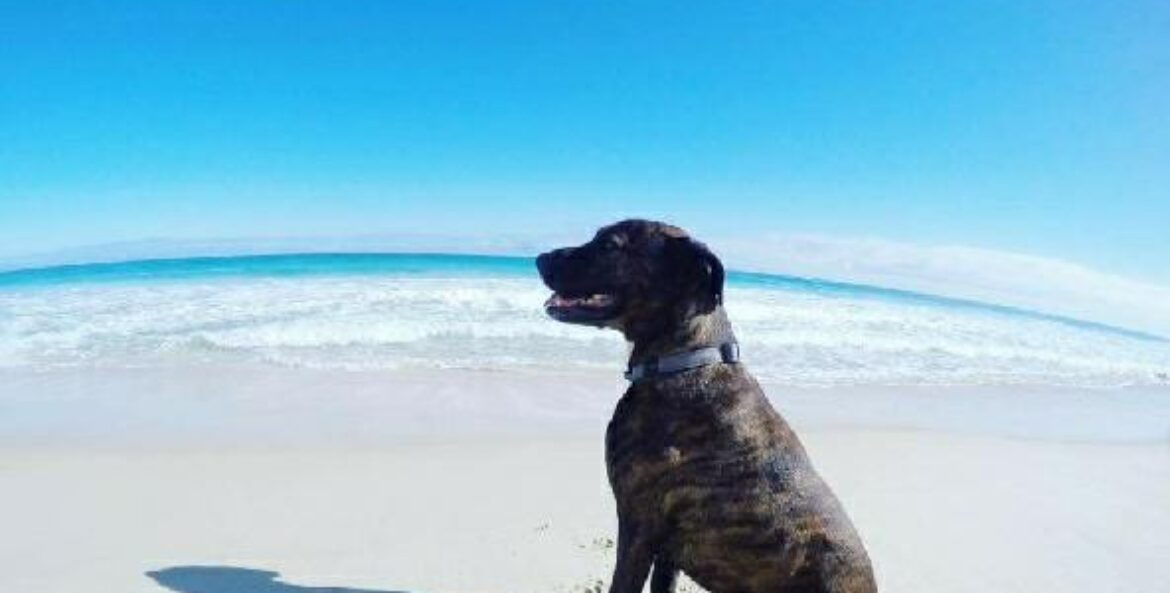 Wilson – SAFE Rescue Dog