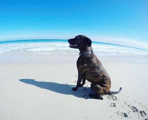 Wilson – SAFE Rescue Dog