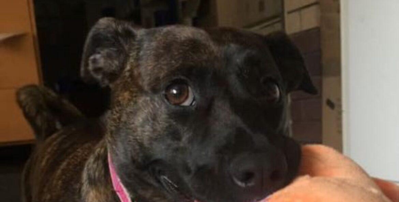 "Meet Rescue Dog ""Tembi"""
